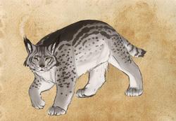 Fen Cat