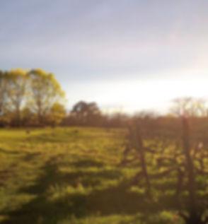 L'aube sur le vignoble
