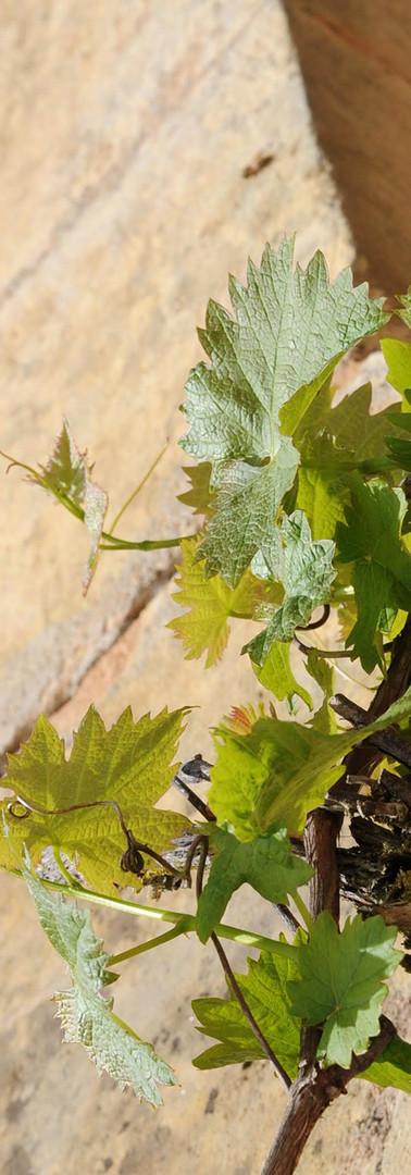 Vigne et nature