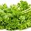 Thumbnail: Specialty Mustard Greens Mix