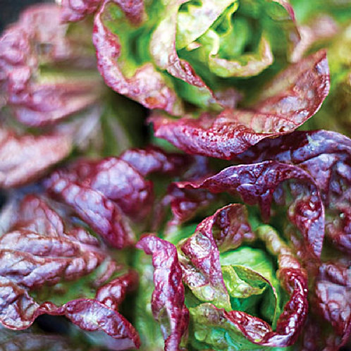 Specialty Lettuce Mix