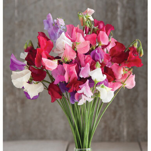 Mixed Sweet Pea Flowers (LF)