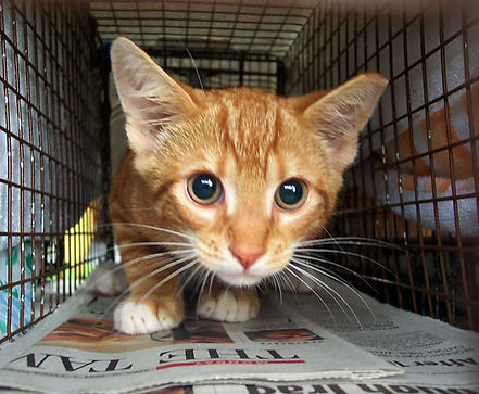 feral-cat-1.jpg