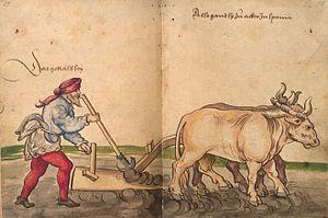 Viandes d'hier et de demain : réflexion autour de la consommation médiévale de produits animaux