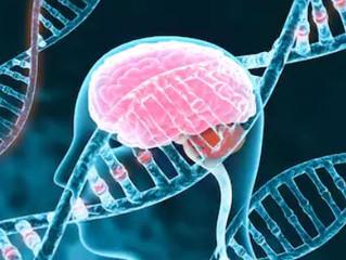 Modification des gènes et QI : démystifier la technolâtrie