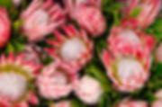 xprotea-small_960_636_95_c1_c_c_0_0.jpg.