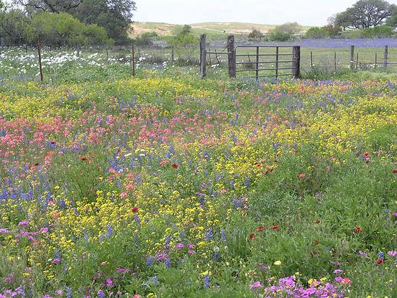 Mixed-wildflowers.jpg