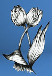 tulips_edited.jpg