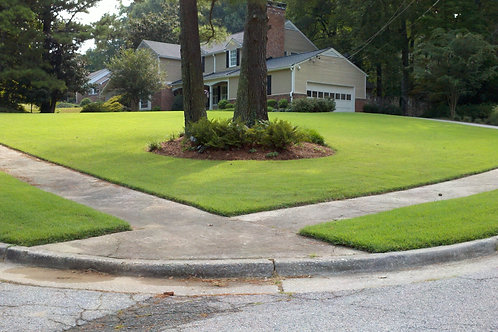 Empire Zoysia (450 Sq. Ft.)