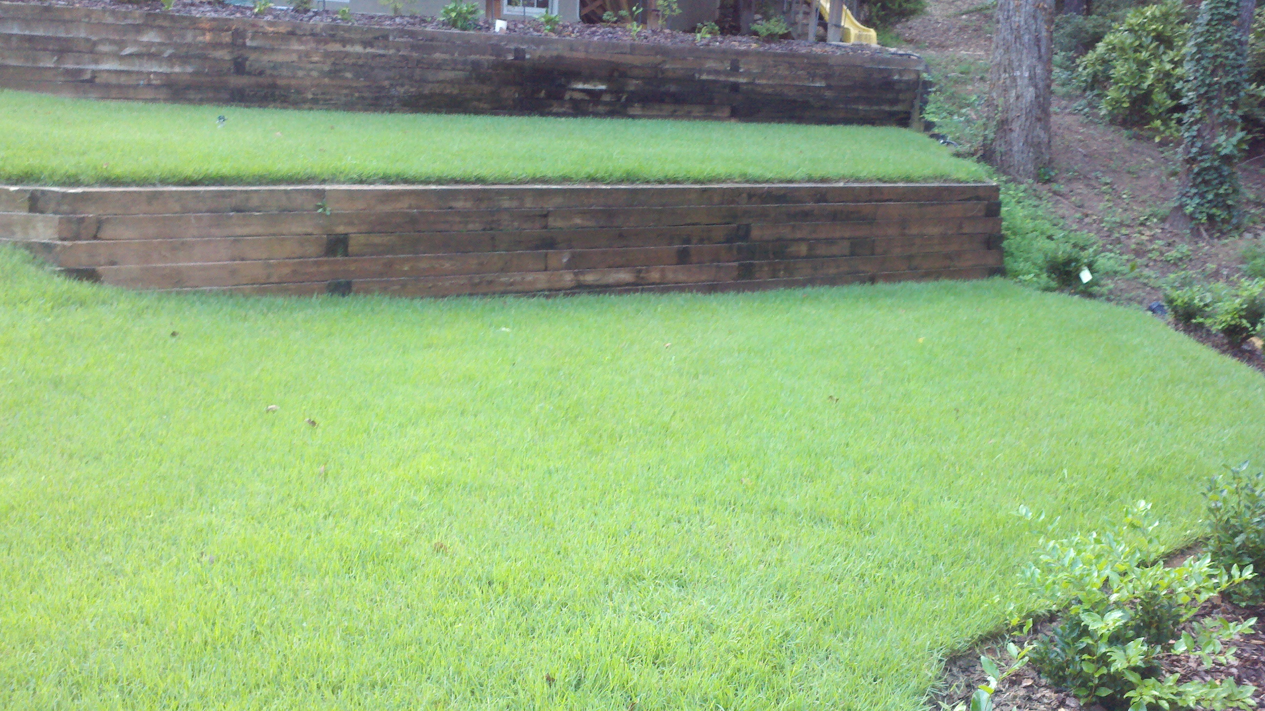 Jamur Zoysia on Terrace