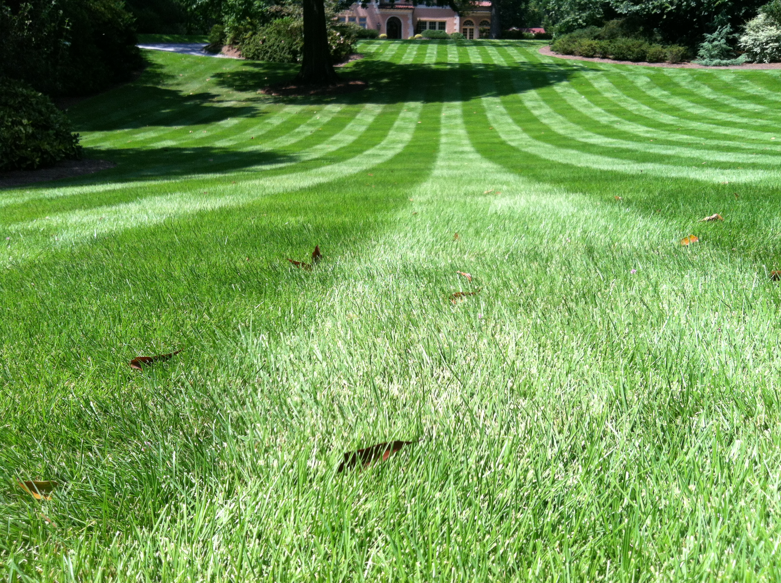 Zeon Zoysia Cut With Reel Mower