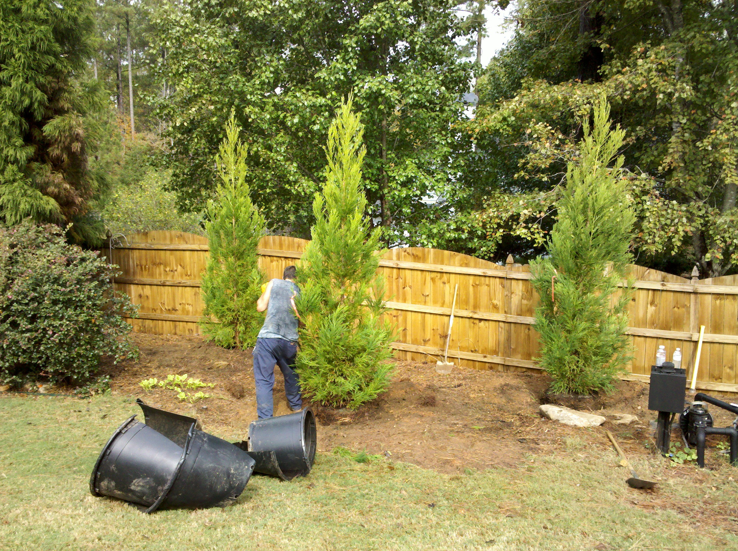 Privacy / Ornamental Trees