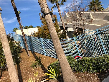 blue fencing in california with palm trees