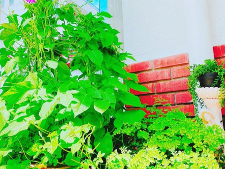 スタジオまえの花壇には