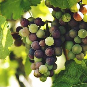 Grape company squeezed $34,920