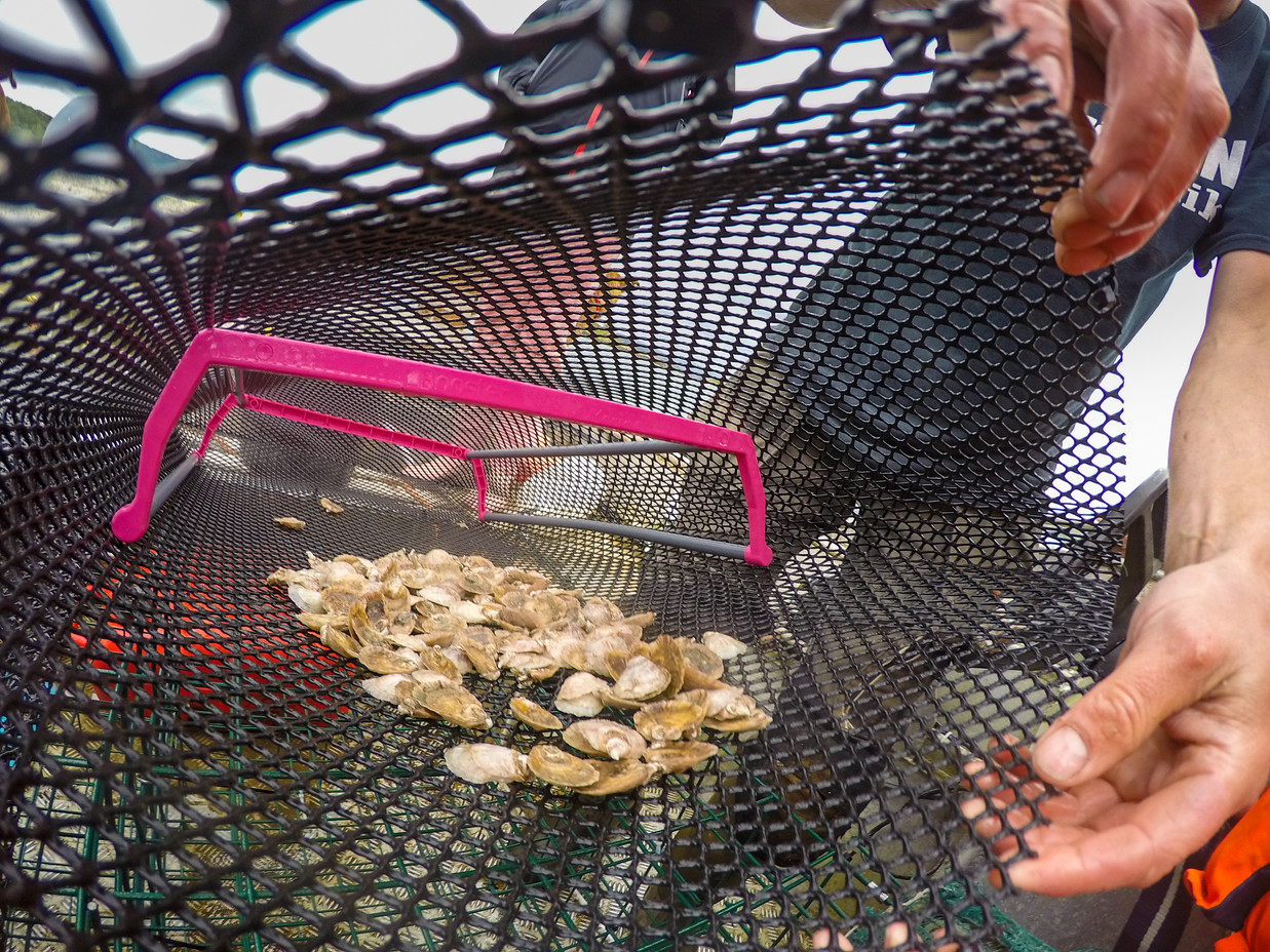 oyster-0125.jpg