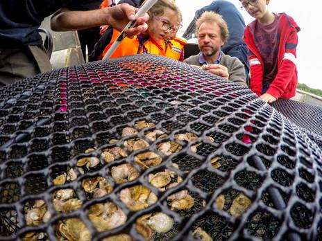 oyster-0126.jpg