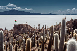 cactus island, uyuni, Bolivia