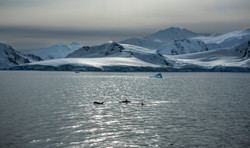Out for the hunt, Antarctica