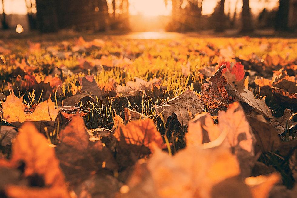 Fall Foliage_edited.jpg