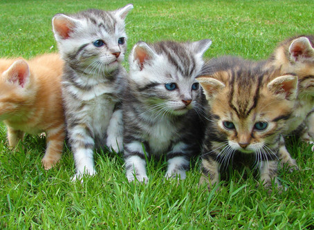 Facebook helps to save the lives of countless kittens