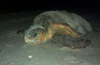 Share the Beach: Keep Sea Turtles Safe
