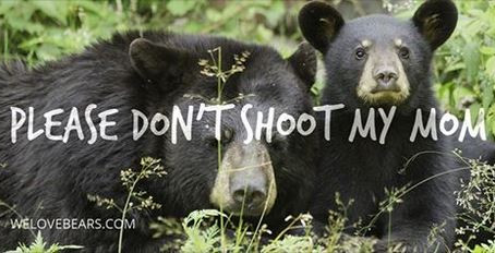 Bears are a nuisance and Florida needs a hunt?