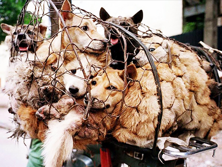 Unconscionable Torture: The Dog Meat Trade