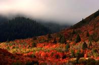 web1200_leafpeeping__autumn-colors-at-su
