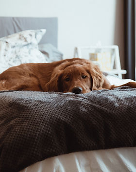 Lazy Brown Dog_edited.jpg