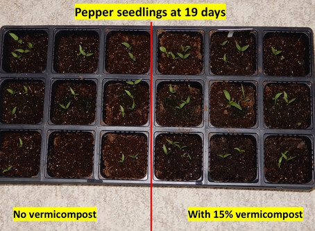 What vermicompost's impact looks like