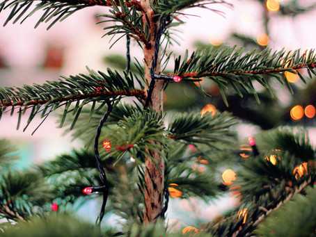 5 suggestions for your dying Christmas tree
