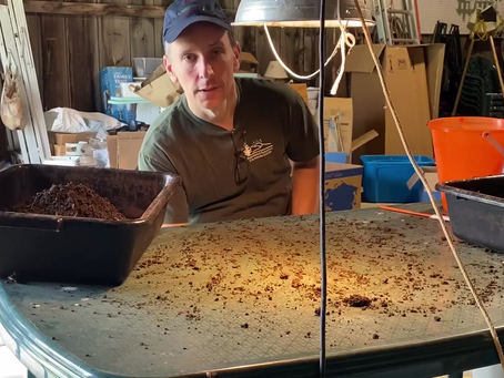 How to Harvest Worm Castings
