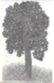 Dessin de Ben Zimet à l'encre un arbre