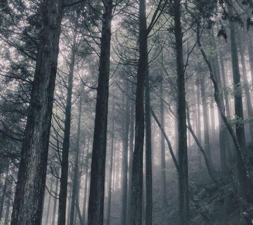 In The Dark Woods | 小瀬村晶