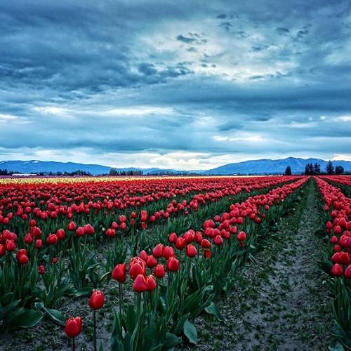 Home   Washington State Funeral Directors Association