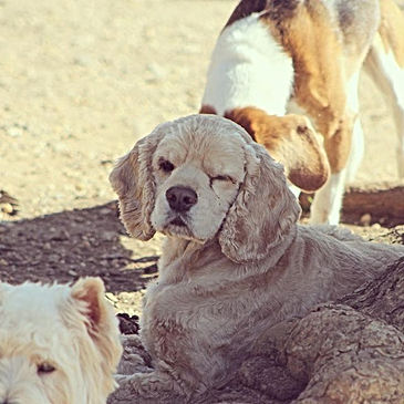 Stay cool everyone! #dogranchresort #cooldog #tgif #dogsofinstgram #winkingharley