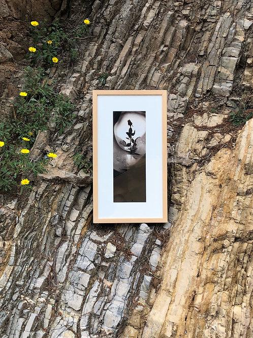 """Fotografía """"Rosa I"""" de Tomy Ceballos"""