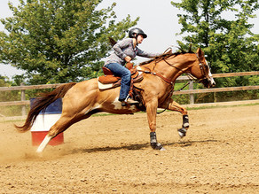 SOTC members enjoy first horse show since pandemic started