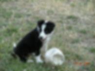 Conseils à l'adoption / arrivée chiot chien