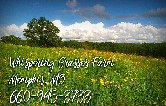 whispering grasses contact info