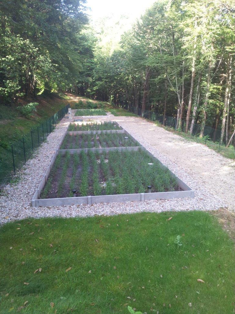 planté de roseaux