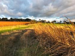 IMG_5736_Farm Landscape5