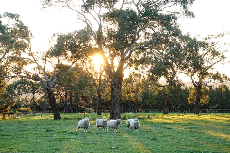 DSC01756_Farm Landscape1