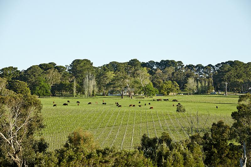 LT_Barrymore_017_Farm Landscape4