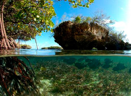 New UNESCO Report on Blue Carbon Aided by Principality of Monaco