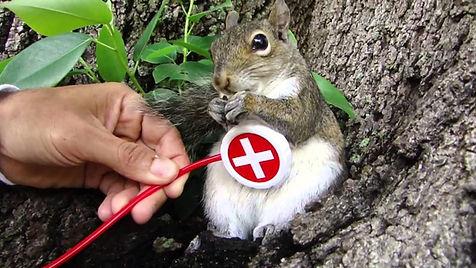 Find a Squirrel Vet.jpg