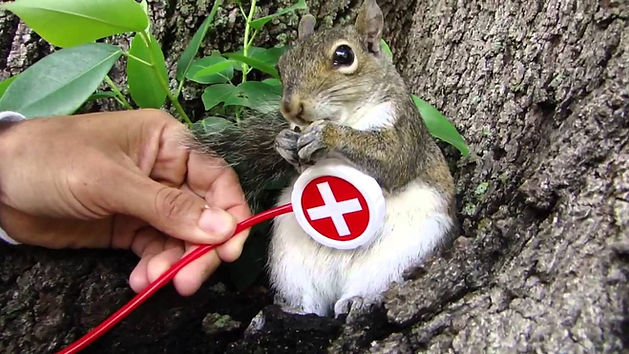 Find a Squirrel Vet.jpg