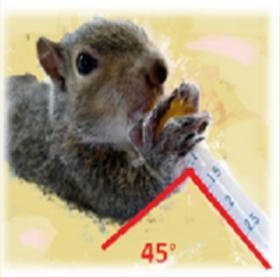 Squirrel%20Syringe%20Feeding%20position_