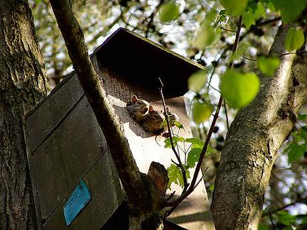 Releasing Squirrels.jpg